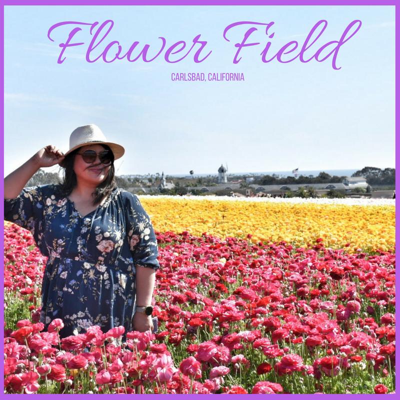 FLOWER FIELD, CARLSBAD